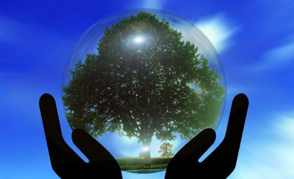 mains tiennent arbre de vie avec fond bleu